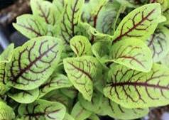 fancy plants 3